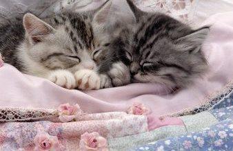Informationen Über Katzen 338x220 - Informationen Über Katzen