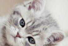 Junge Katzen Abzugeben 220x150 - Junge Katzen Abzugeben