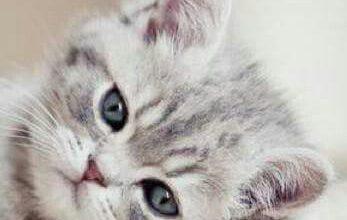 Junge Katzen Abzugeben 347x220 - Junge Katzen Abzugeben
