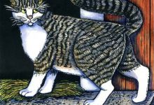 Junge Katzen Bilder Bilder Kostenlos 220x150 - Junge Katzen Bilder Bilder Kostenlos
