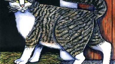 Junge Katzen Bilder Bilder Kostenlos 390x220 - Junge Katzen Bilder Bilder Kostenlos