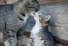 Junge Katzen Gratis 220x150 - Junge Katzen Gratis