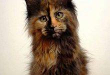 Kätzchen 220x150 - Kätzchen