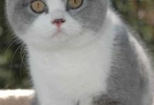 Kätzchen Foto 220x150 - Kätzchen Foto