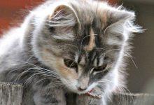 Katze 220x150 - Katze