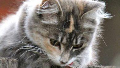 Katze 390x220 - Katze