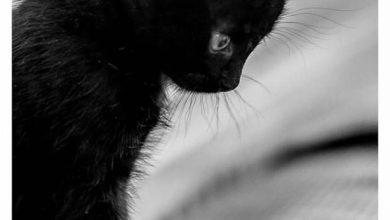 Katze Abzugeben 390x220 - Katze Abzugeben