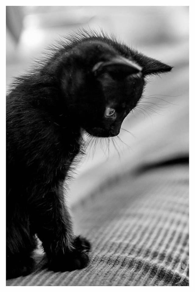 Katze Abzugeben - Katze Abzugeben