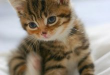 Katze Durchfall 220x150 - Katze Durchfall
