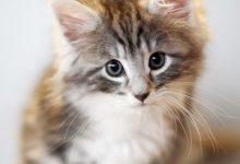 Katze Erbricht 220x150 - Katze Erbricht