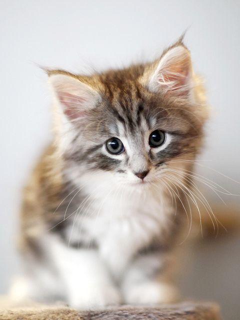 Katze Erbricht - Katze Erbricht