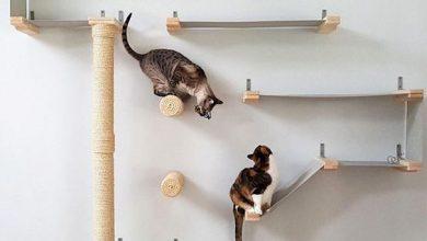Katze Frisst Nicht 390x220 - Katze Frisst Nicht
