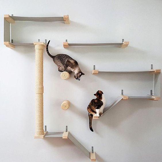 Katze Frisst Nicht - Katze Frisst Nicht