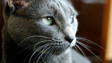 Katze Haustier 390x220 - Katze Haustier