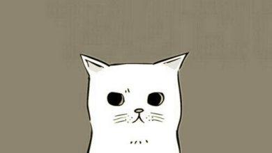 Katze Hund Bilder Kostenlos 390x220 - Katze Hund Bilder Kostenlos