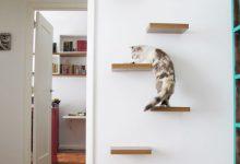 Katze Im Bild 220x150 - Katze Im Bild
