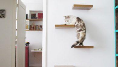 Katze Im Bild 390x220 - Katze Im Bild