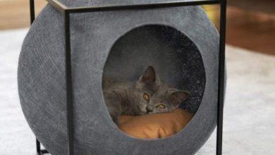 Katze In Der Fensterbank 390x220 - Katze In Der Fensterbank
