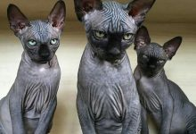 Katze Kastrieren 220x150 - Katze Kastrieren