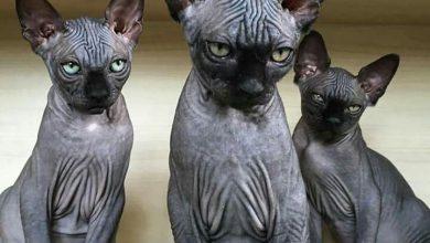 Katze Kastrieren 390x220 - Katze Kastrieren