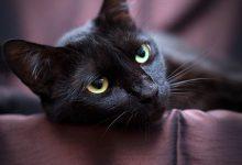 Katze Kater 220x150 - Katze Kater
