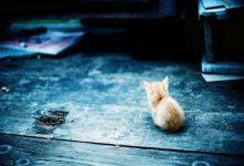 Katze Katze Katze 220x150 - Katze Katze Katze