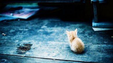 Katze Katze Katze 390x220 - Katze Katze Katze