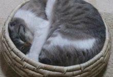 Katze Katze Katze Bilder Kostenlos 220x150 - Katze Katze Katze Bilder Kostenlos