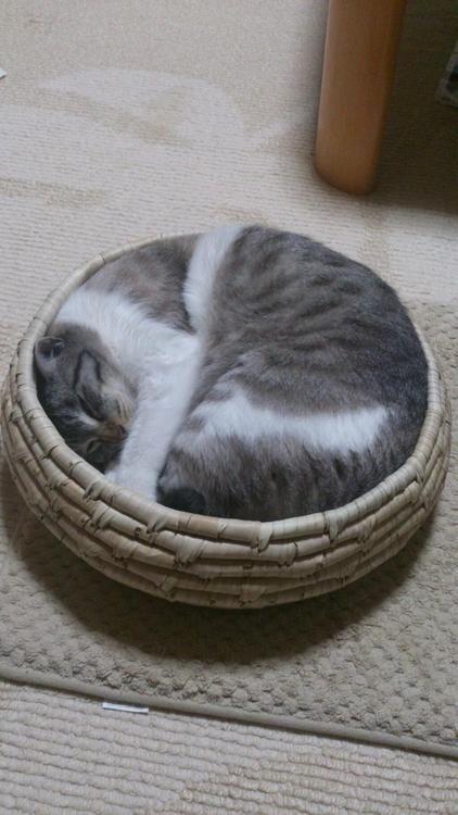 Katze Katze Katze Bilder Kostenlos - Katze Katze Katze Bilder Kostenlos