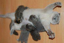 Katze Menkun Bilder 220x150 - Katze Menkun Bilder