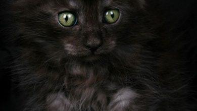 Katze Stubenrein 390x220 - Katze Stubenrein