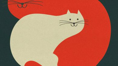 Katze Stubenrein Bilder Kostenlos 390x220 - Katze Stubenrein Bilder Kostenlos