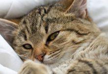 Katze Trächtig 220x150 - Katze Trächtig
