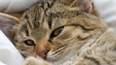 Katze Trächtig 390x220 - Katze Trächtig