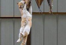 Katze Trächtig Bilder Kostenlos 220x150 - Katze Trächtig Bilder Kostenlos