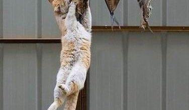 Katze Trächtig Bilder Kostenlos 376x220 - Katze Trächtig Bilder Kostenlos