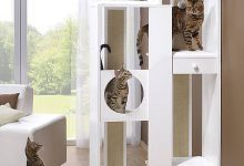 Katze Und Du 220x150 - Katze Und Du
