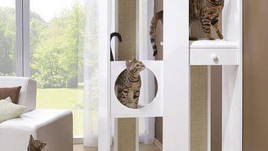 Katze Und Du 390x220 - Katze Und Du