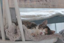 Katze Witzig 220x150 - Katze Witzig