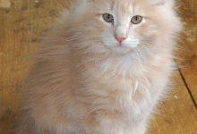 Katzen Aids 220x150 - Katzen Aids