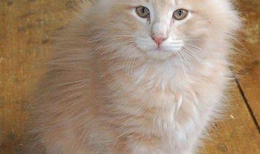 Katzen Aids 372x220 - Katzen Aids