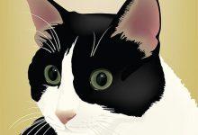 Katzen App Kostenlos 220x150 - Katzen App Kostenlos