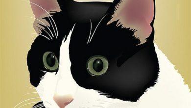 Katzen App Kostenlos 390x220 - Katzen App Kostenlos