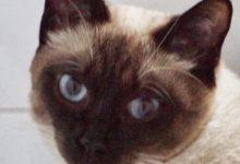Katzen Ausmalbilder 220x150 - Katzen Ausmalbilder