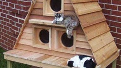 Katzen Ausmalbilder Zum Ausdrucken 390x220 - Katzen Ausmalbilder Zum Ausdrucken