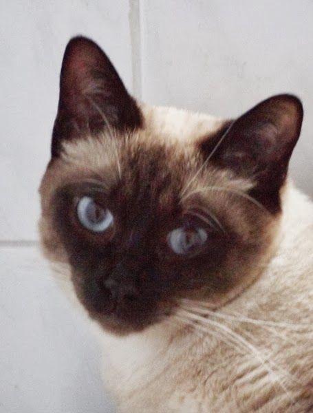 katzen ausmalbilder  bilder und sprüche für whatsapp und
