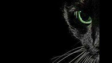 Katzen Bilde 390x220 - Katzen Bilde