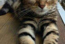 Katzen Bilder Ausdrucken 220x150 - Katzen Bilder Ausdrucken