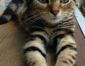 Katzen Bilder Ausdrucken 284x220 - Katzen Bilder Ausdrucken
