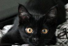 Katzen Bilder Baby 220x150 - Katzen Bilder Baby